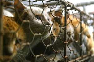 Chinese Demonstrate Against Cat Meat Industry