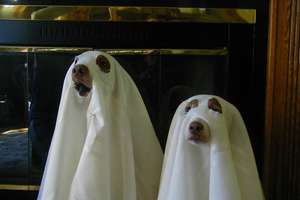 Spooky and Peculiar Pet Pastimes