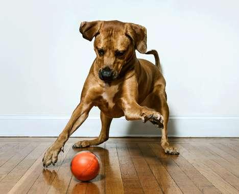 Streaming POV Pet Toys