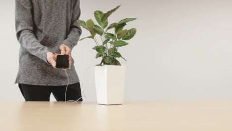 Eco-Friendly Phone Chargers - This Phone-Charging Plant Powers Your Smartphone Battery the Green Way