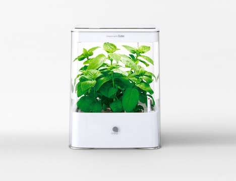 Cuisine-Enhancing Farm Boxes - The U-ING Hydroponic Grow System Keeps Fresh Herbs Constantly Growing