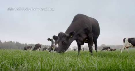 In-Store Dairy Farm Projections - Waitrose's 'Live from the Farm' Campaign Showcased Product Origins