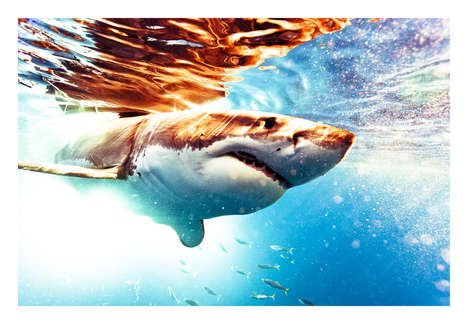 Shocking Shark Photography - This Photographer Swims with Sharks to Capture Them in Their Homes