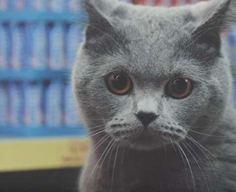 Viral Cat Commercials