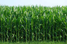 NubeSol's Remote Sensing Services Are Boosting the Indian Sugar Industry