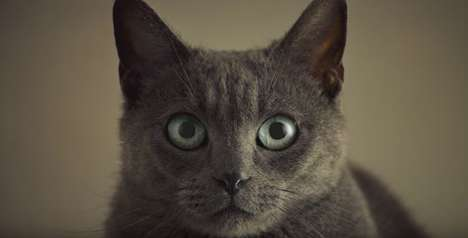 Romantic Cat Food Ads - This Sheba Cat Food Commercial Shows Just How Devoted Its Pet Owners Are