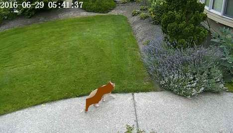 Deep Learning Cat Repellents - This Software Uses Nvidia Tech to Keep Cats Off Lawns