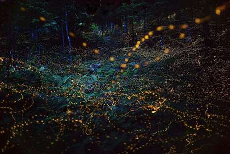 Long-Exposure Firefly Photography - These Images Show the Thousands of Fireflies in Japanese Gardens