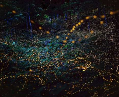 Long-Exposure Firefly Photography