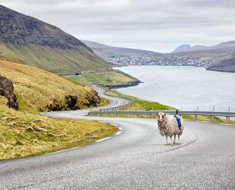 Sheep-Mounted Map Imaging
