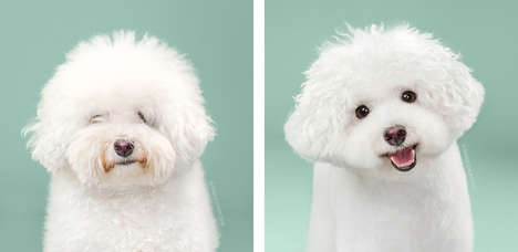 Dog Grooming Photo Series - The 'Hairy' Series Features the Before and After of Canine Makeovers