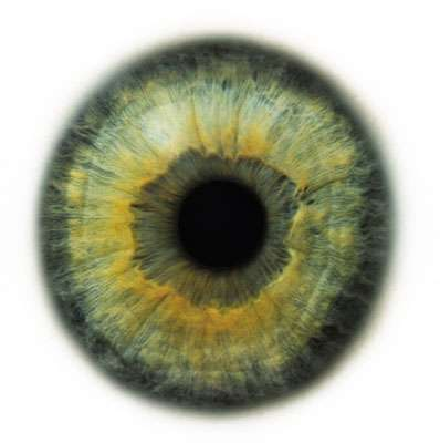 Intense Iris Photography