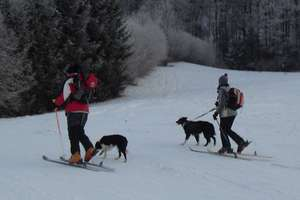 Eco-Friendly Uphill Skiing In The Alps... With Your Canine Companion