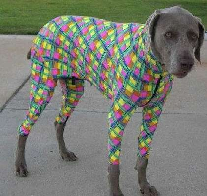 Criminalizing Canine Couture