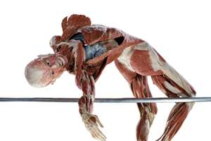 Anatomy-Inspired 'Body Worlds' is Artistically Educational