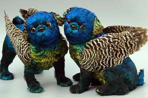 Emily Valentine Bullock's Bird Feather Dogs