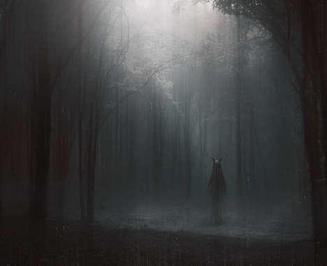 Eerie Woodland Photography
