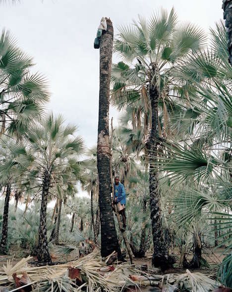 African Tree Tapping Photographs - This Series Captures Nambian Men Scaling Trees for Palm Wine Sap