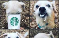 Coffee Shop Adoption Initiatives - The Kitsap Humane Society is Taking Adoptable Dogs to Starbucks