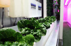 Vertical Farming Progams