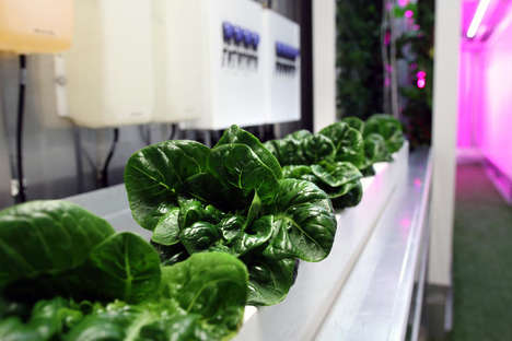 Vertical Farming Progams - The Square Roots Initiative Trains Urban Dwellers in Sustainable Growing