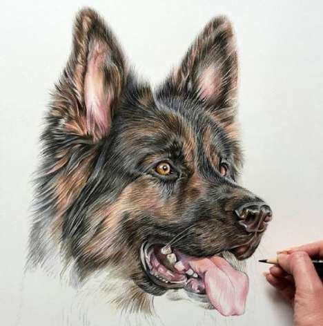 Photoreal Pet Sketches - Angie Creates Realistic Drawings Based on People's Lovable Cats and Dogs