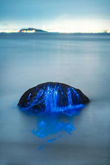 Bioluminscent Plankton Photography - This Photography Series Shows a Beautiful Phenomenon in Japan