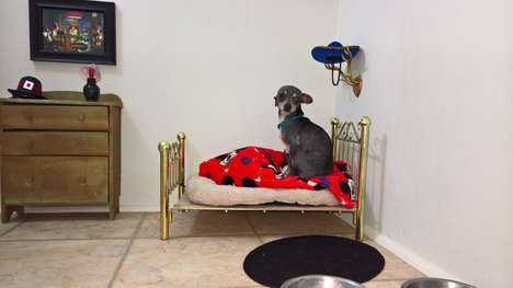 Miniature Chihuahua Bedrooms - This Dog Room for Poncho the Chihuahua is Situated Under the Stairs