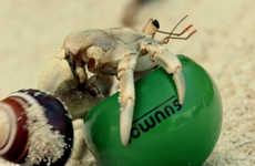 This Unusual CSR Program Creates Eco-Friendly Homes for Hermit Crabs
