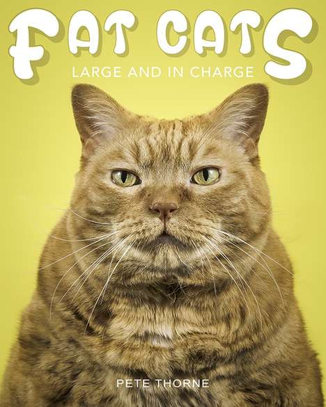 Fat Feline Photography - Pete Thorne's 'Fat Cats' Coffee Table Book Celebrate Corpulent Cats