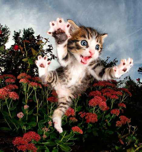 Flying Kitten Photography Books - Seth Casteel's 'POUNCE' Features Images of Leaping Rescue Cats