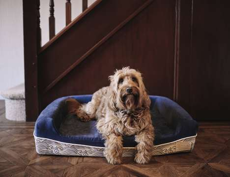 One-for-One Dog Beds - The Ralph & Co Memory Foam Dog Bed Ensures Comfy Canine Naps
