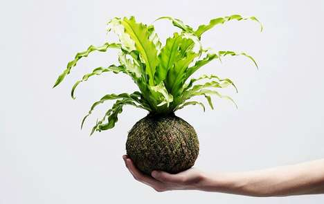 Ornamental Indoor Plants - The Kokedama Collection from We Smell the Rain is Inherently Modern