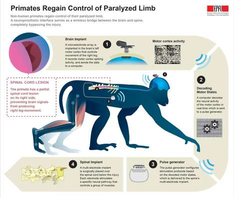Paralysis-Mending Neural Implants - The EPFL's Brain-Spine Interface Has Let Primates Walk Again