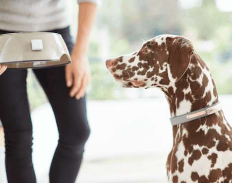 Pet-Monitoring Home Systems - Felcana Works to Ensure the Mental and Physical Health of Pets