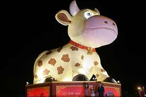 Chinese Zodiac Says Year of Ox Is Good For Obama and Economy