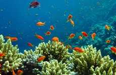 Coral Reef Burials