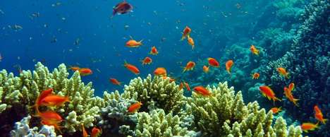 Coral Reef Burials - 'Hawaii Memorial Reefs' Turns People's Remains into Coral Reefs