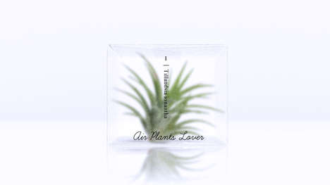 Semi-Opaque Plant Packaging - These Air Plants Offer Minimalist Decor to the Home