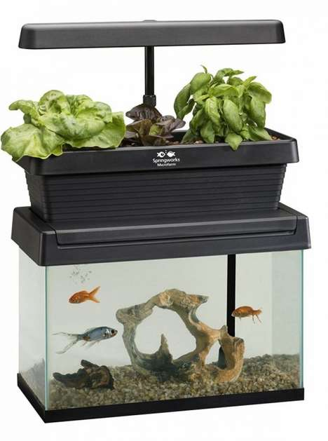 Symbiotic Fish Tank Gardens - The Springworks Microfarm Aquaponic Garden Grows Fresh Produce