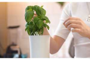 Botanium Allows People to Grow Fruits and Vegetables Indoors