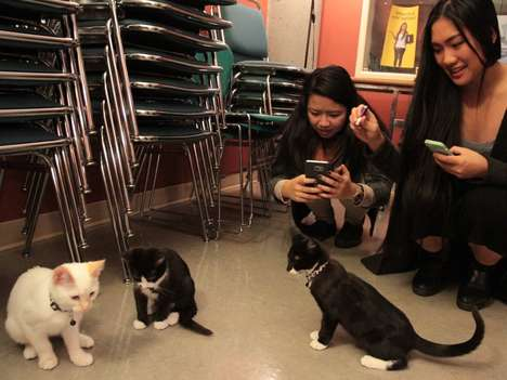 Exam Animal Therapy Sessions - Simon Fraser University Offered a Kitten Therapy Session for Students