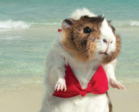Swimsuit Photoshoot Parody Ads