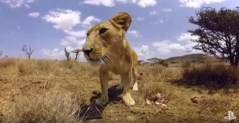 VR Wildlife Safaris - Virry VR Lets Users Get Up Close with African Animals