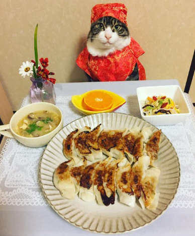Feline Culinary Photoshoots - Maro the Cosplay Chef Cat Combines Authentic Food and Outfits