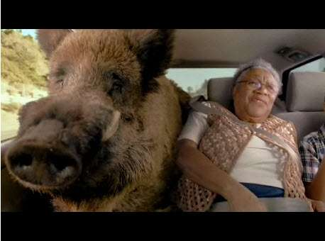 Roadtrips With Warthogs