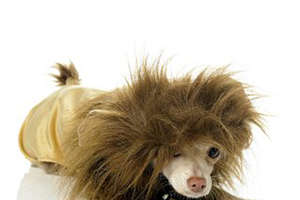 Carnival Mask and Costumes for Your Furry Friends From Maskworld