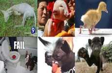 22 Celebrity Animals