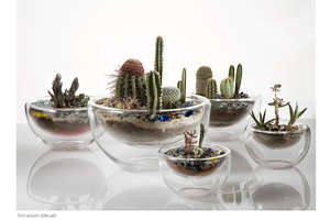 Tiny Glass Terrariums by Paula Hayes