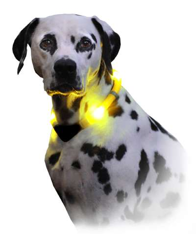 LED Light Dog Collars - LEUCHTIE Dog Collars Ensure the Safety of Pets Outdoors